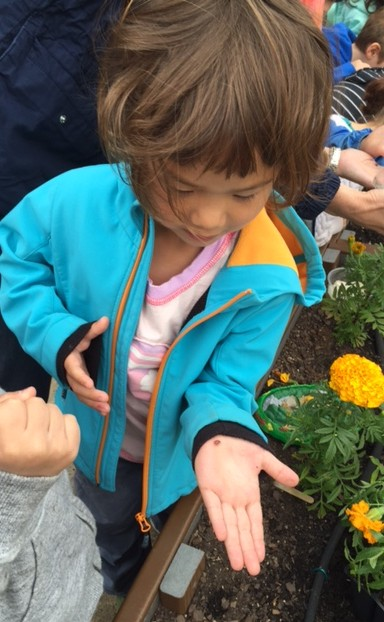 The type of bug that help the plants grow: Lady Bugs!