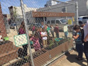 As soon as break ended, students prepared to transplant seedlings!