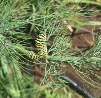 Chomping caterpillar